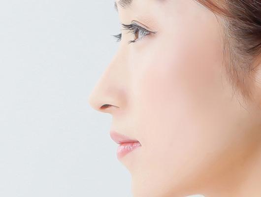 鼻の形成の特徴